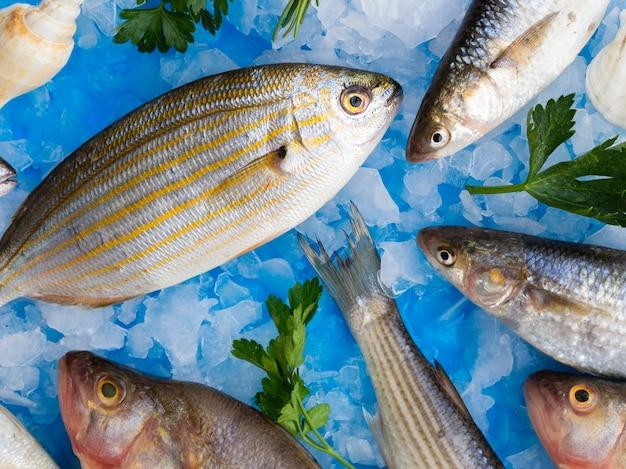 Vista dall'alto pesce fresco su cubetti di ghiaccio con erbe