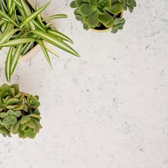 Vista dall'alto raccolta di piante con spazio di copia