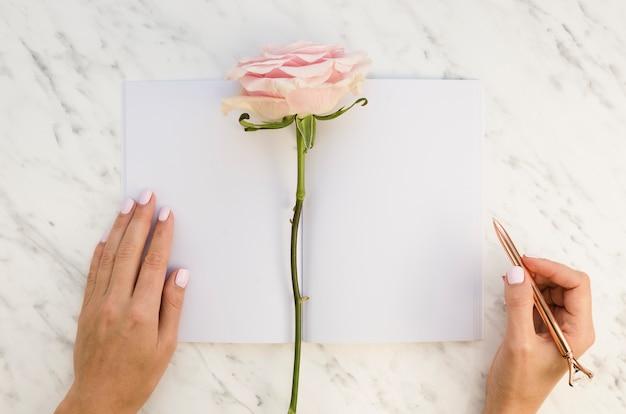 Vista dall'alto rosa con mani femminili