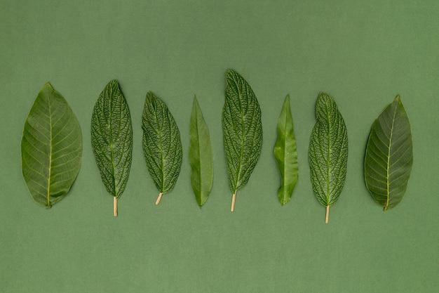 Vista dall'alto varietà di foglie botaniche