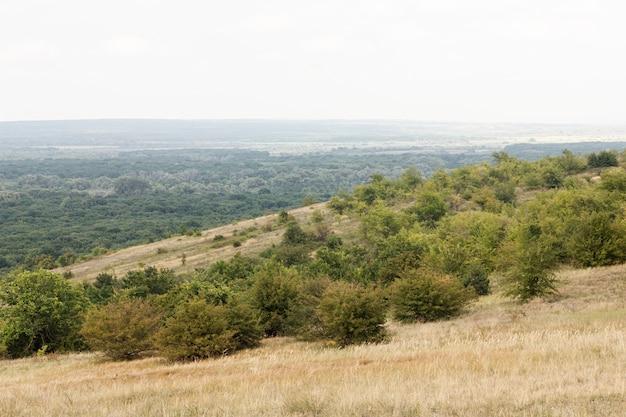 Vista dall'alto vista sulla foresta rurale