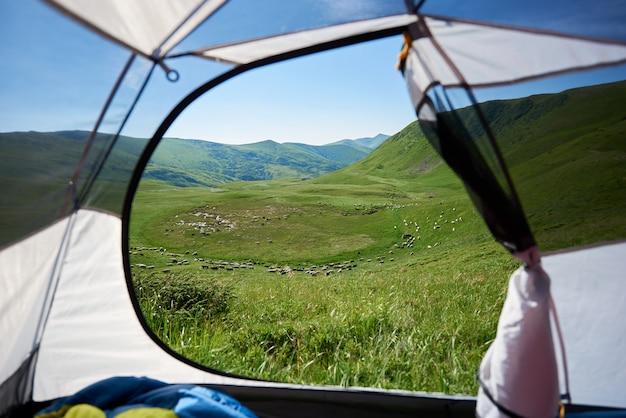 Vista dall'entrata della tenda del gregge di pecore sul pascolo alpino.