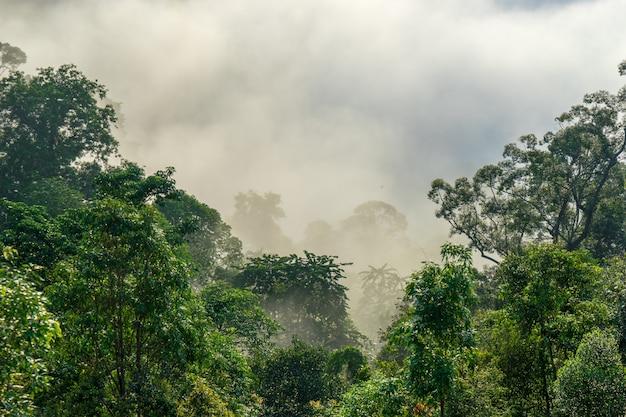 Vista degli alberi coperti da nebbia nel distretto di aiyoweng, tailandia del sud.