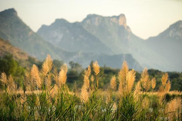 Vista del paesaggio dal parco nazionale di sam roi yod