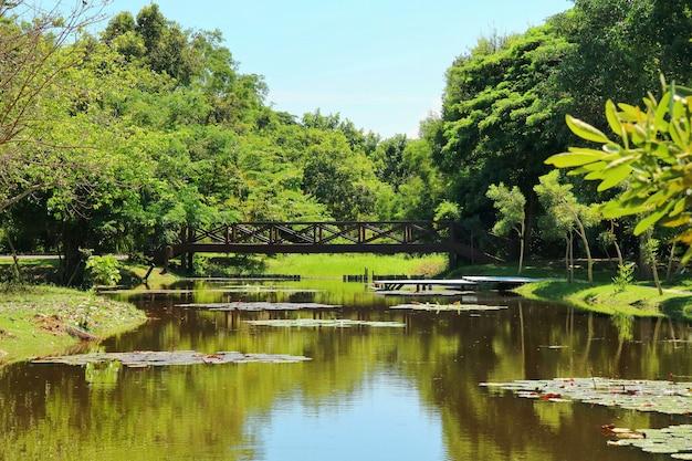 Vista del paesaggio del parco con stagno, loto, ponte di legno e alberi tropicali.