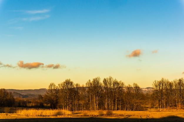 Vista del paesaggio di campi dorati con alberi spogli e montagne in autunno