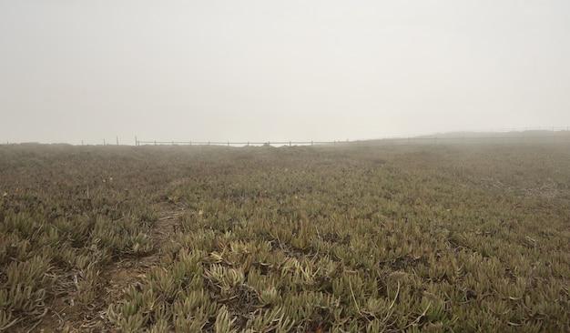 Vista del paesaggio di erba verde e recinzione in legno a cabo da roca