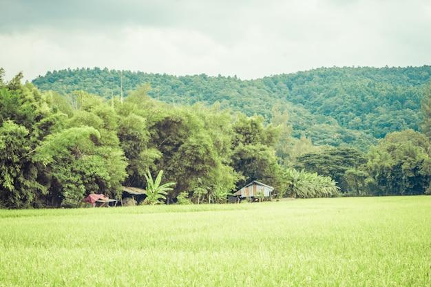 Vista del paesaggio naturale con le montagne