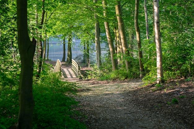 Vista del percorso, alberi, vegetazione e ponte sullo stagno nel parco in primavera.