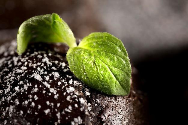 Vista del primo piano del concetto del cioccolato con le foglie di menta