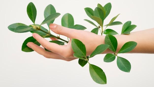 Vista del primo piano del concetto verde delle foglie a disposizione