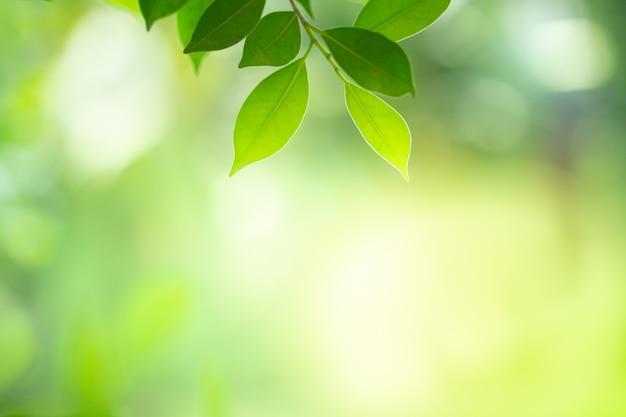 Vista del primo piano della foglia verde con bokeh bellezza sotto la luce del sole