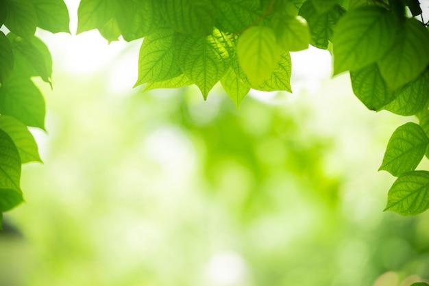 Vista del primo piano di colore naturale foglia verde sotto la luce del sole. sfondo del concetto di natura
