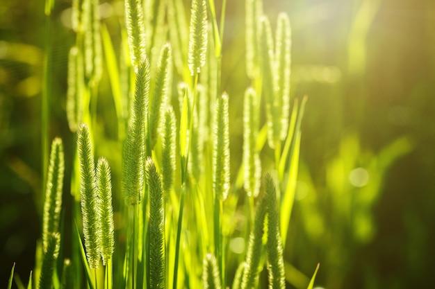 Vista del primo piano di erba verde