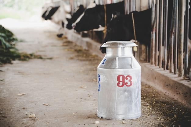 Vista del primo piano sulle mucche di mungitura del secchio al granaio animale