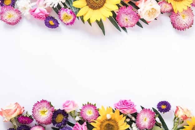 Vista dell'angolo alto dei fiori freschi variopinti su fondo bianco