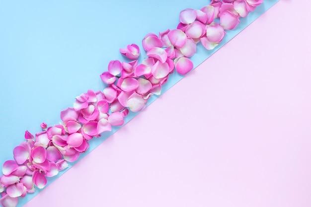 Vista dell'angolo alto dei petali del fiore fresco su doppio fondo rosa e blu