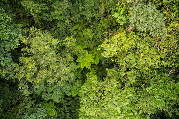 Vista dell'angolo alto dei rami di albero in foresta pluviale alla costa rica