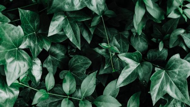 Vista dell'angolo alto della pianta verde della foglia