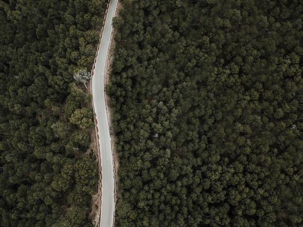 Vista dell'angolo alto della strada vuota in terreno boscoso