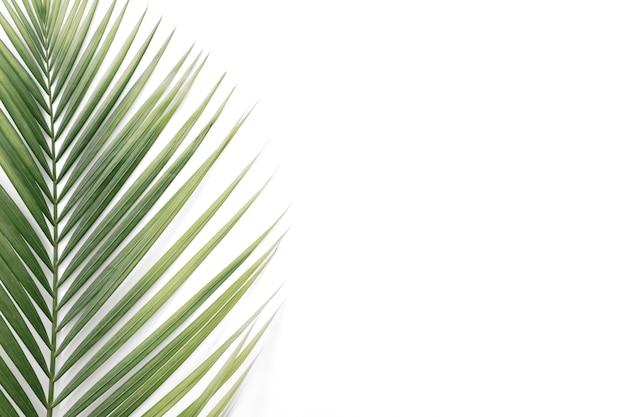 Vista dell'angolo alto delle foglie di palma tropicali isolate su fondo bianco
