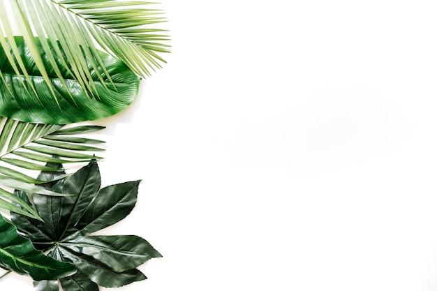 Vista dell'angolo alto delle foglie tropicali differenti sul contesto bianco