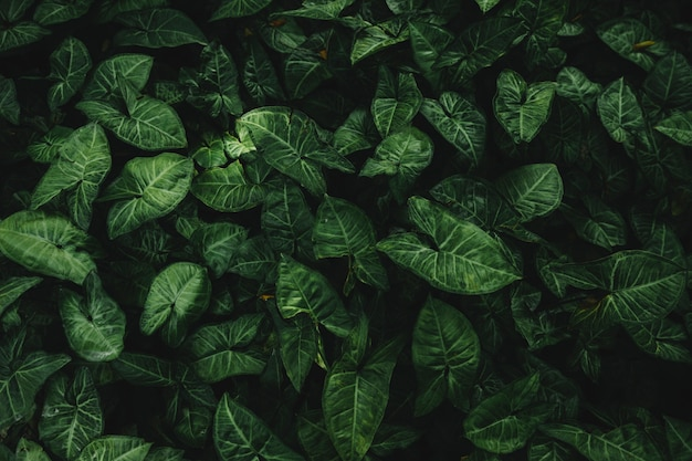 Vista dell'angolo alto delle foglie verdi