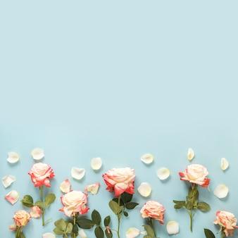 Vista dell'angolo alto delle rose nella parte inferiore del contesto blu