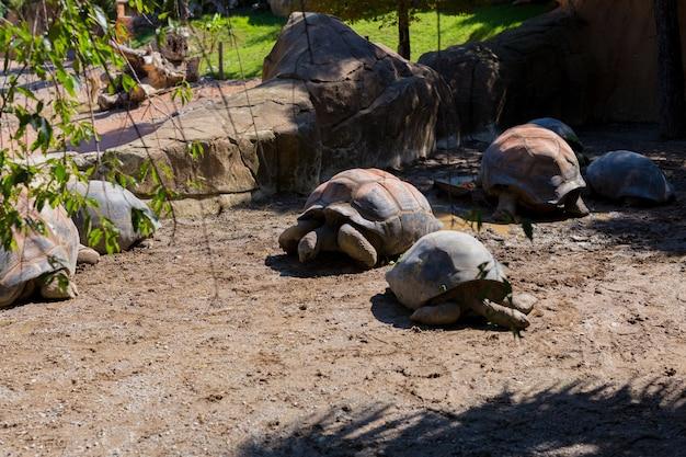 Vista dell'angolo alto delle tartarughe giganti sul campo allo zoo. estate.