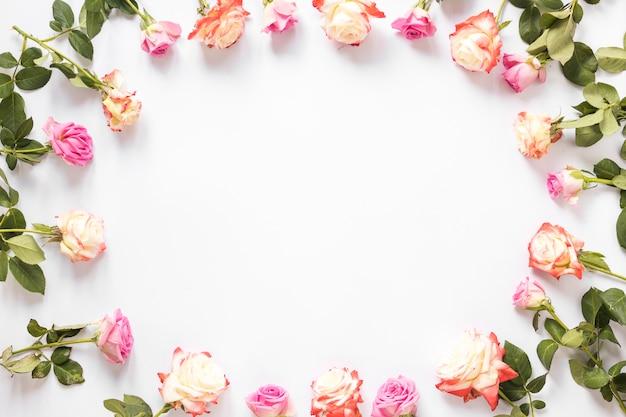 Vista dell'angolo alto di belle rose che formano struttura su fondo bianco