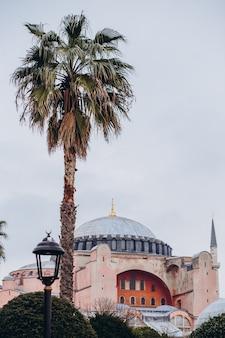 Vista della basilica di santa sofia attraverso le foglie delle palme
