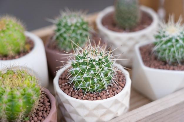 Vista della crescita del cactus sul piccolo vaso bianco.