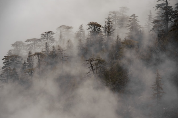 Vista della foresta coperta in una nebbia