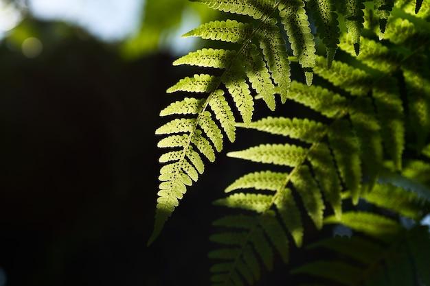 Vista della natura del primo piano della foglia verde con sfondo di luce solare nel paesaggio naturale delle piante verdi del giardino, concetto di carta da parati fresca.