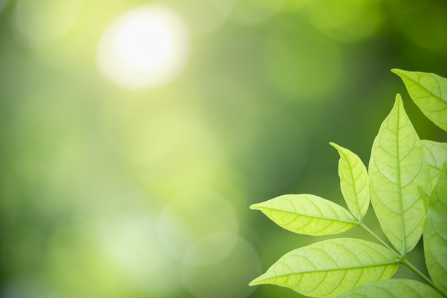 Vista della natura foglia verde su sfondo sfocato sotto la luce del sole