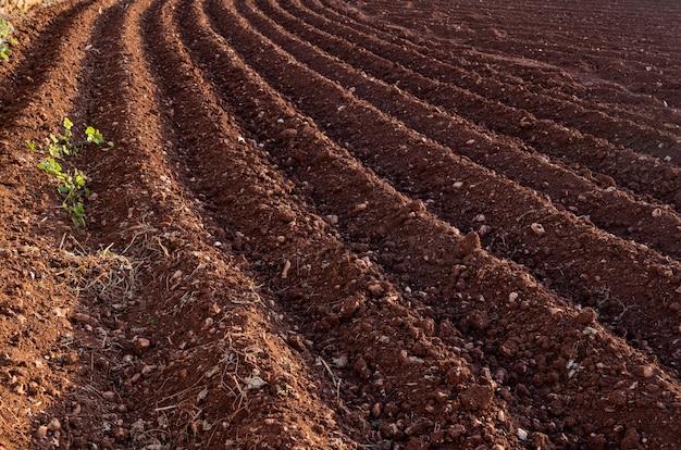 Vista della terra arata. solchi dall'aratro. agricoltura