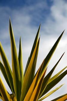 Vista di alcune foglie di cactus che punta verso il cielo blu.