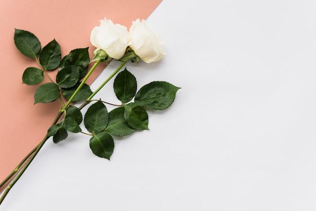 Vista di alto angolo di due belle rose su sfondo doppio
