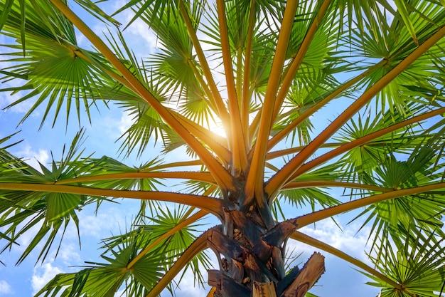 Vista di angolo basso della palma nel cielo