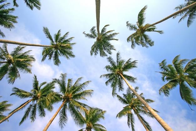 Vista di angolo basso delle palme contro il cielo blu