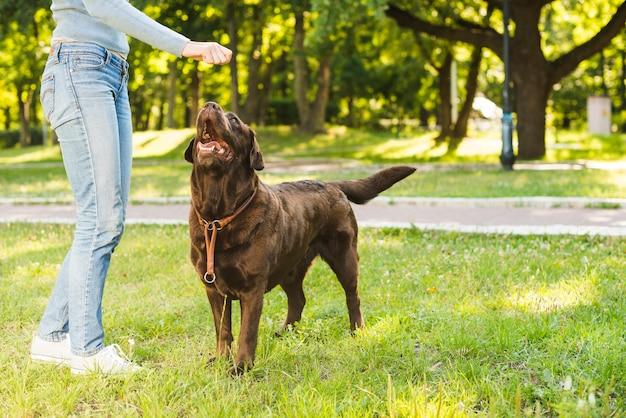 Vista di sezione bassa di una donna che gioca con il suo cane nel parco