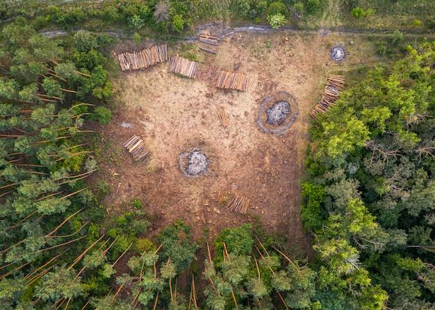 Vista di una foresta disboscata