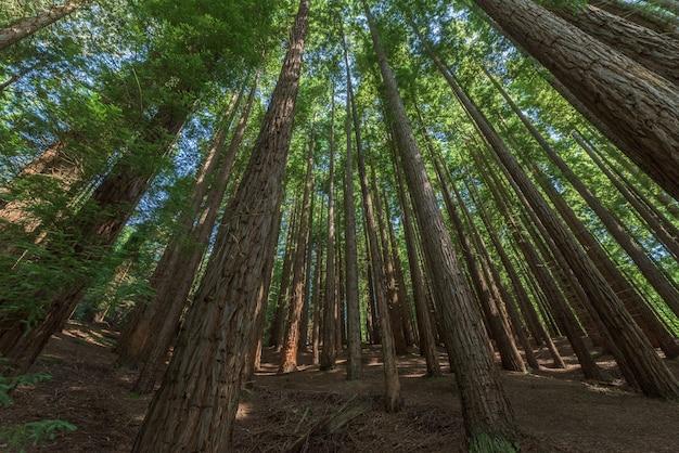 Vista di una foresta in autunno