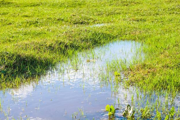 Vista di una pozzanghera e erba