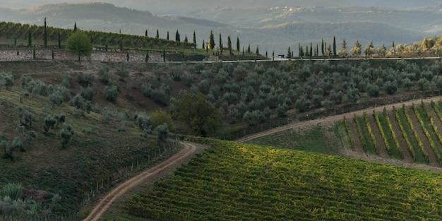 Vista elevata dei vigneti nella valle, gaiole in chianti, toscana, italia