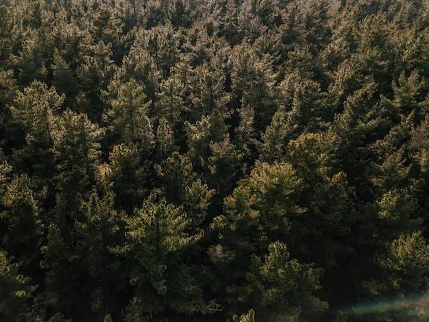 Vista elevata della foresta di conifere