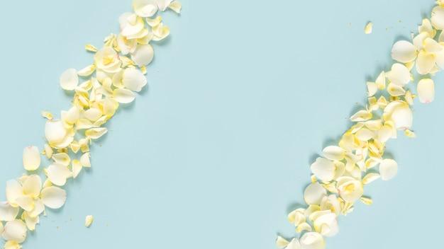 Vista elevata di petali di fiori su sfondo blu