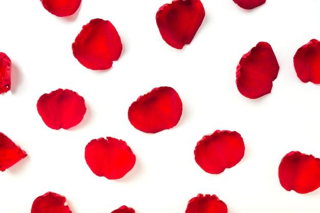 Vista elevata di petali rossi su sfondo bianco