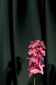 Vista frontale bella orchidea rosa