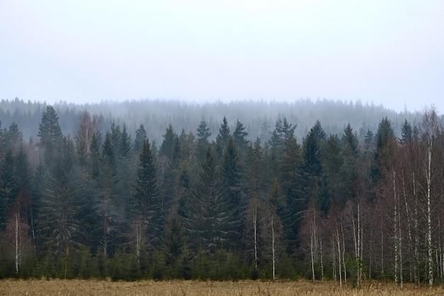 Vista frontale colpo di una foresta in un tempo nebbioso